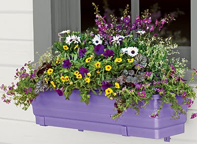 New Self-Watering Windowbox in grape color