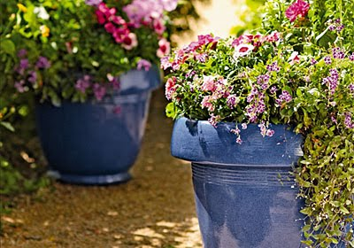 Planters with Energized Potting Mix