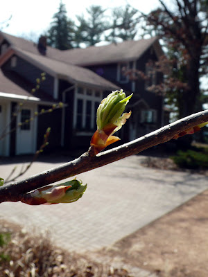 Budburst — Gardeners as Citizen Scientists