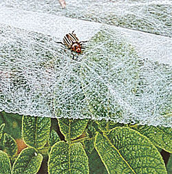 Garden fabric to protect plants from pest insects
